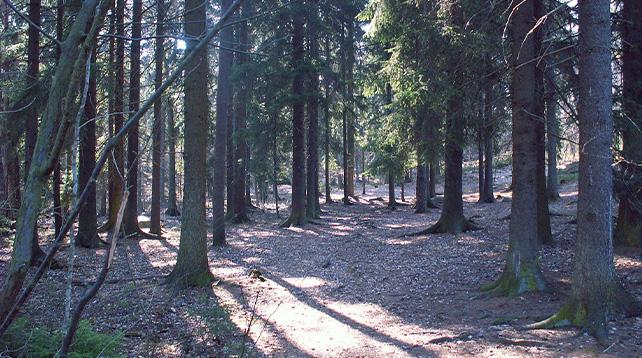 Pilgrimsvandring i Älvsjöskogen 24 april