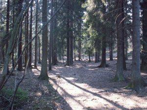 Pilgrimsvandring i Älvsjöskogen
